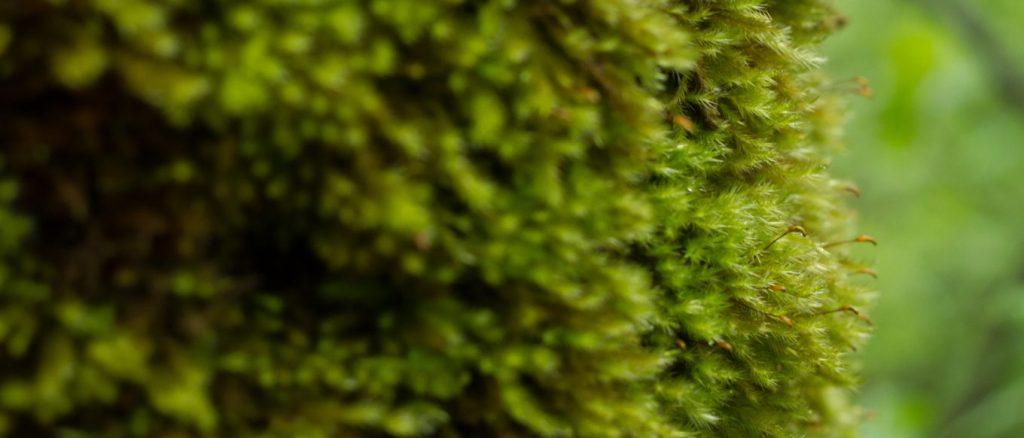 cropped-xy_march16-3.jpg
